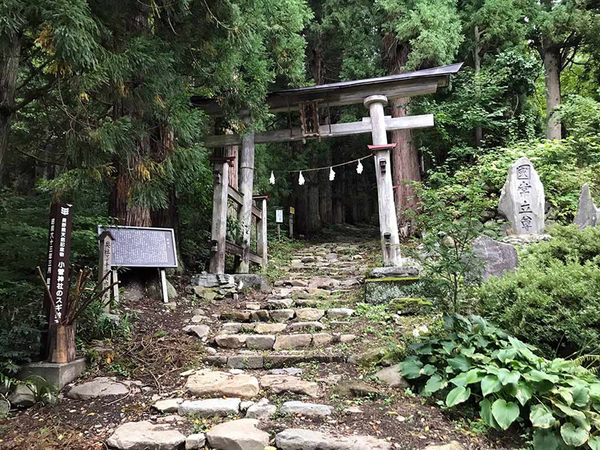 NozawaOnsen-mountain-bike-trails-guided-trip-2.jpg